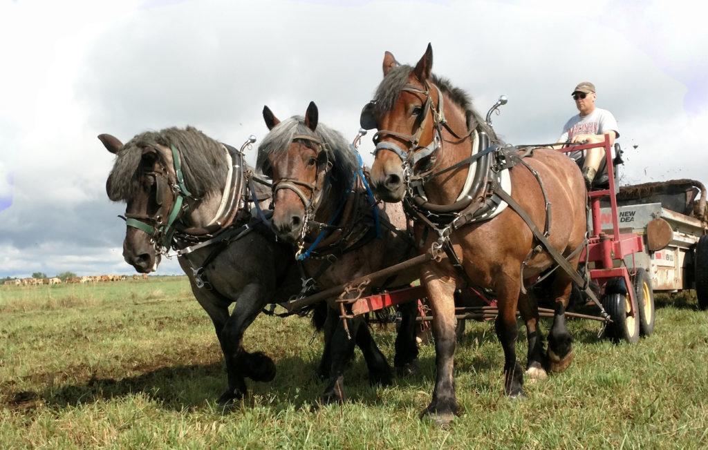 three horses pulling Jason on manure spreader